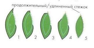 листья из ткани
