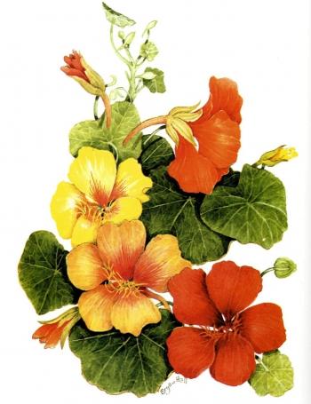 Вырезаем из рисунка цветы